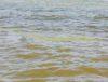 Cyanobacteria in the Gdansk Bay, photo: Jakub Wozniak/Tricity News