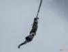 Bungee Jumper, photo: Jakub Wozniak/Tricity News